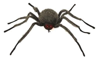 Фото Зеленый паук с красными глазами