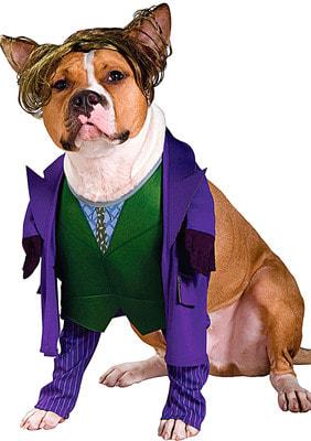 Фото Костюм для собаки Джокер