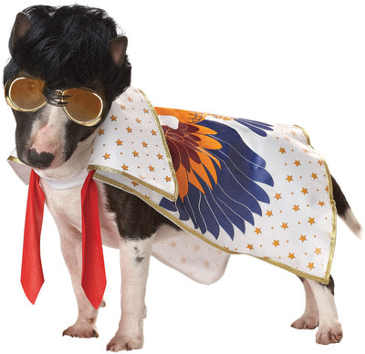 Фото Костюм для собаки Король рок-н-ролла