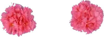Фото Браслеты гавайские deluxe розовые