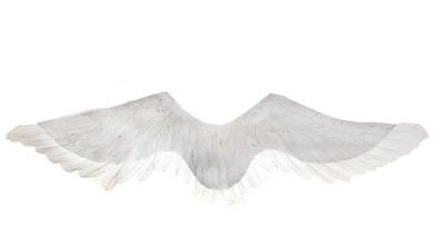 Фото Крылья ангела белый лебедь