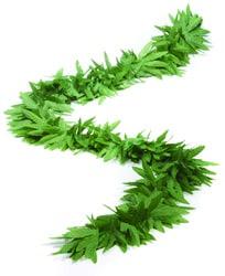 Фото Боа из зелёных листьев