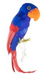 Фото Попугай пирата синий