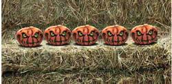 Фото Набор из 5 страшных тыкв