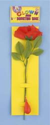 Фото Плачущая роза
