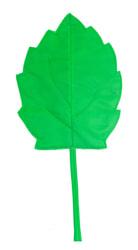 Фото Осенний листок березовый зеленый