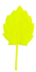 Фото Осенний листок березовый желтый